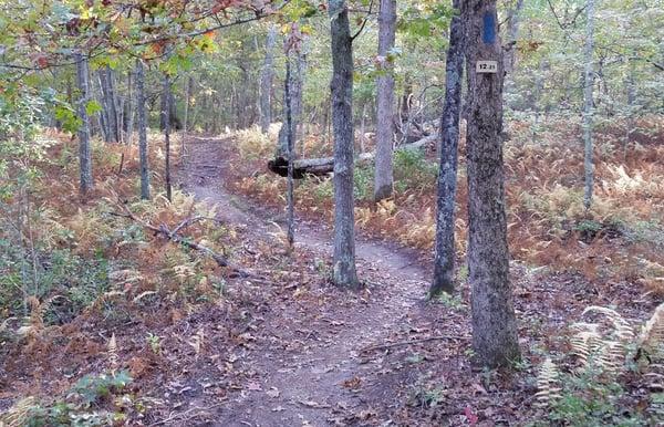 manorville-county-park.jpg
